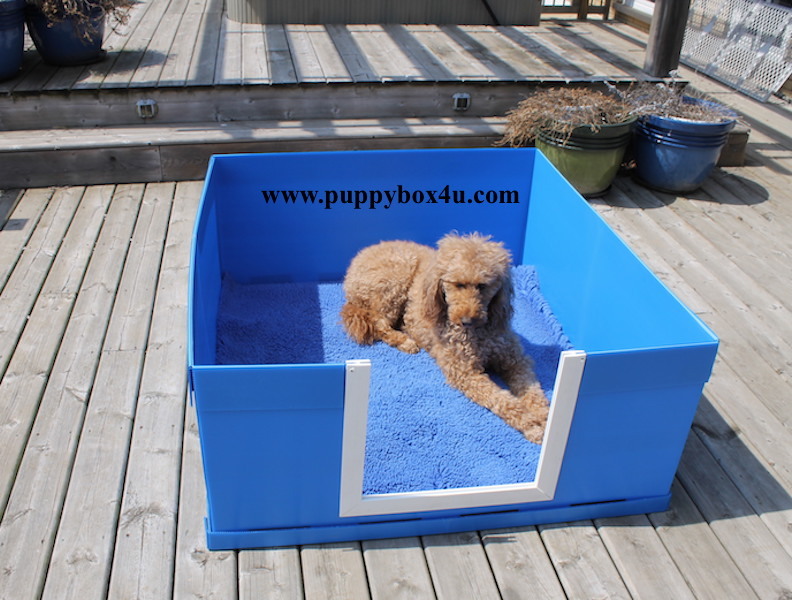 Whelping Box, Puppy Box, Puppy Birth, Whelping & Puppy Delivery