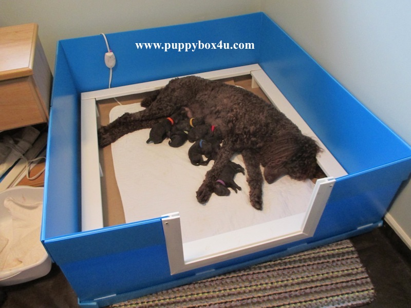 how to build a whelping box for a large dog
